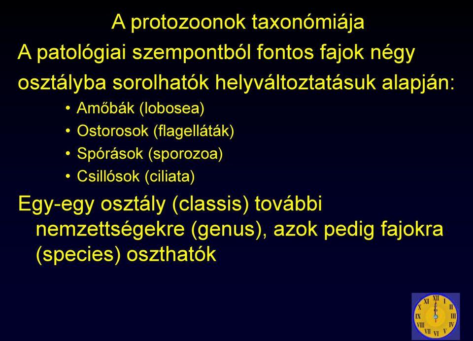 a protozoonok rezisztens formája)