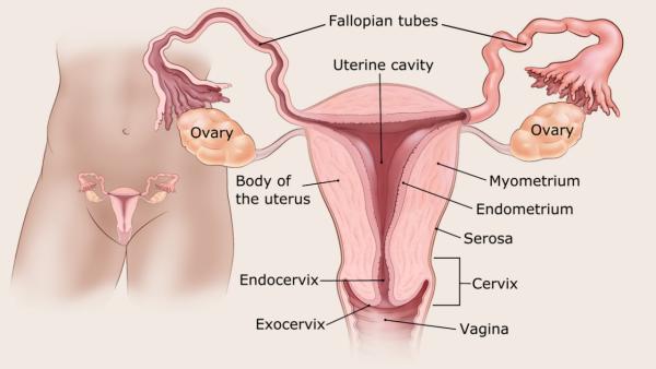 endometrium rák endometriosis)