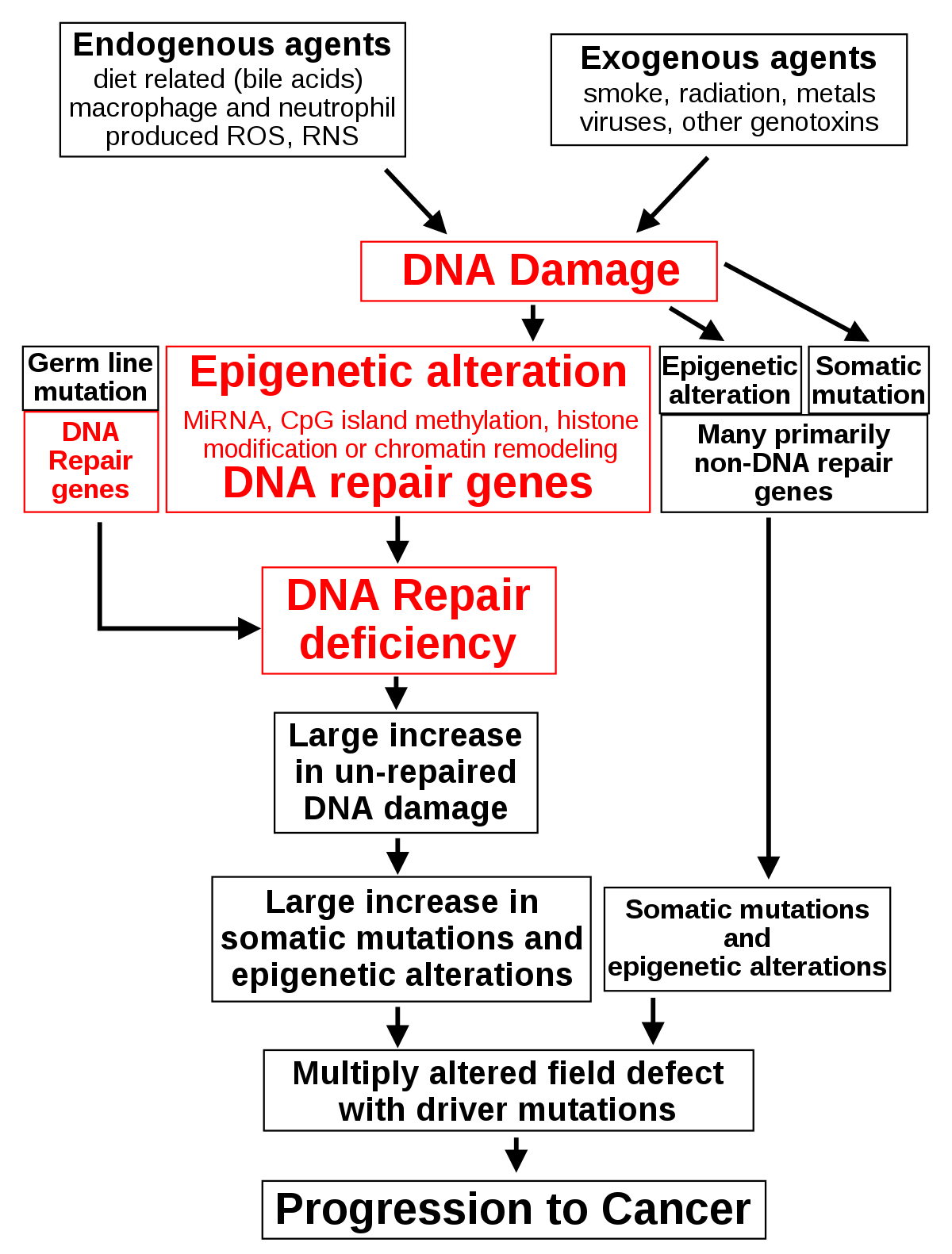 endometrium rák tumor markerek