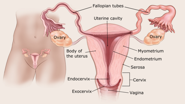 endometrium rák felülvizsgálata)