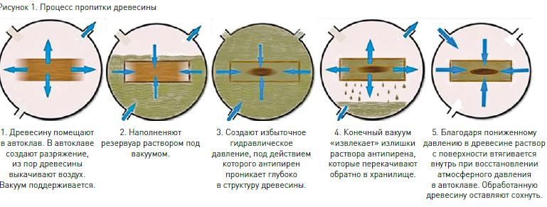 fenyőféreg kezelés