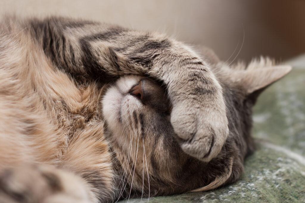 giardia behandlung katze