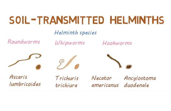Helminths helminthiases, BNO – Fertőző és parazitás betegségek – Wikipédia