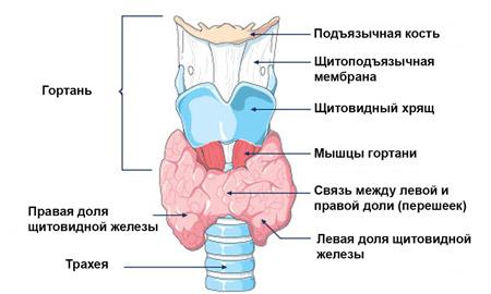 hiperplasztikus pikkelyes papilloma