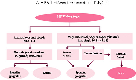 hpv vírus hogyan működik