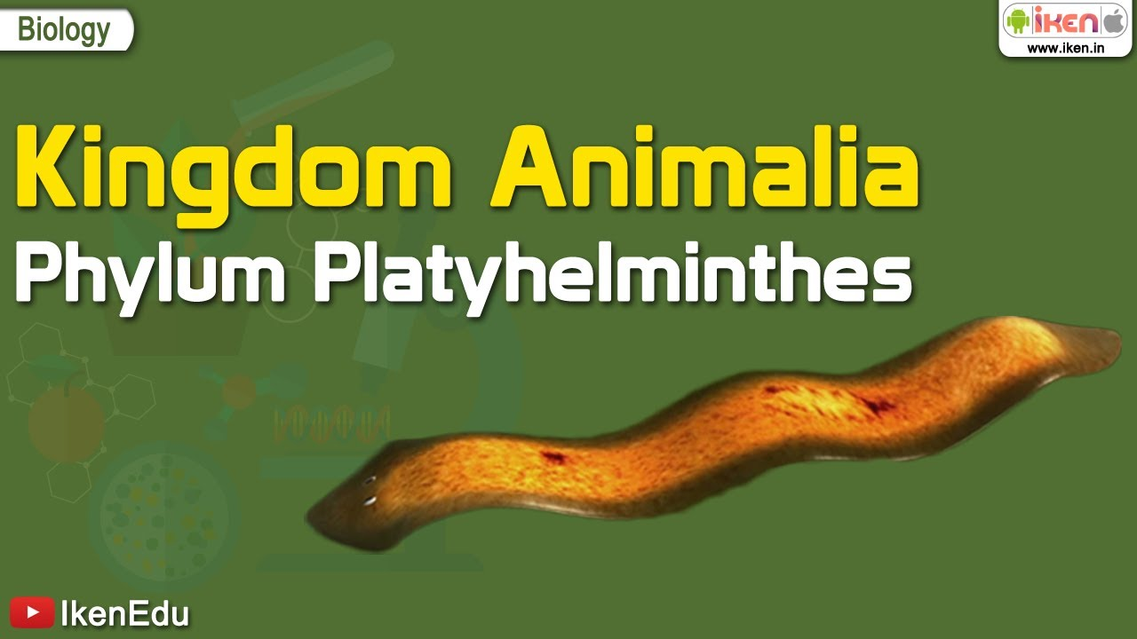 élőhely platyhelminthes)