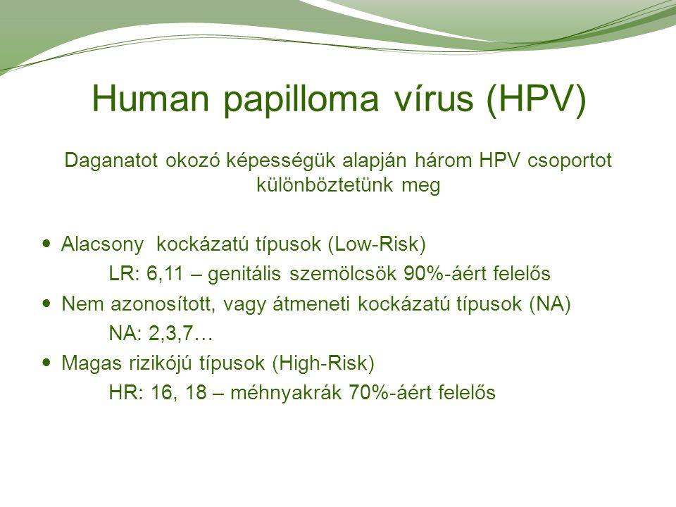 magas kockázatú papilloma vírus