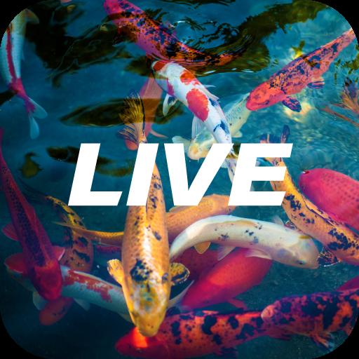 Akváriumhalak kezdőknek