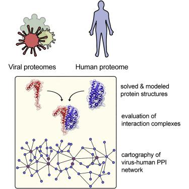 íny papilloma vírus