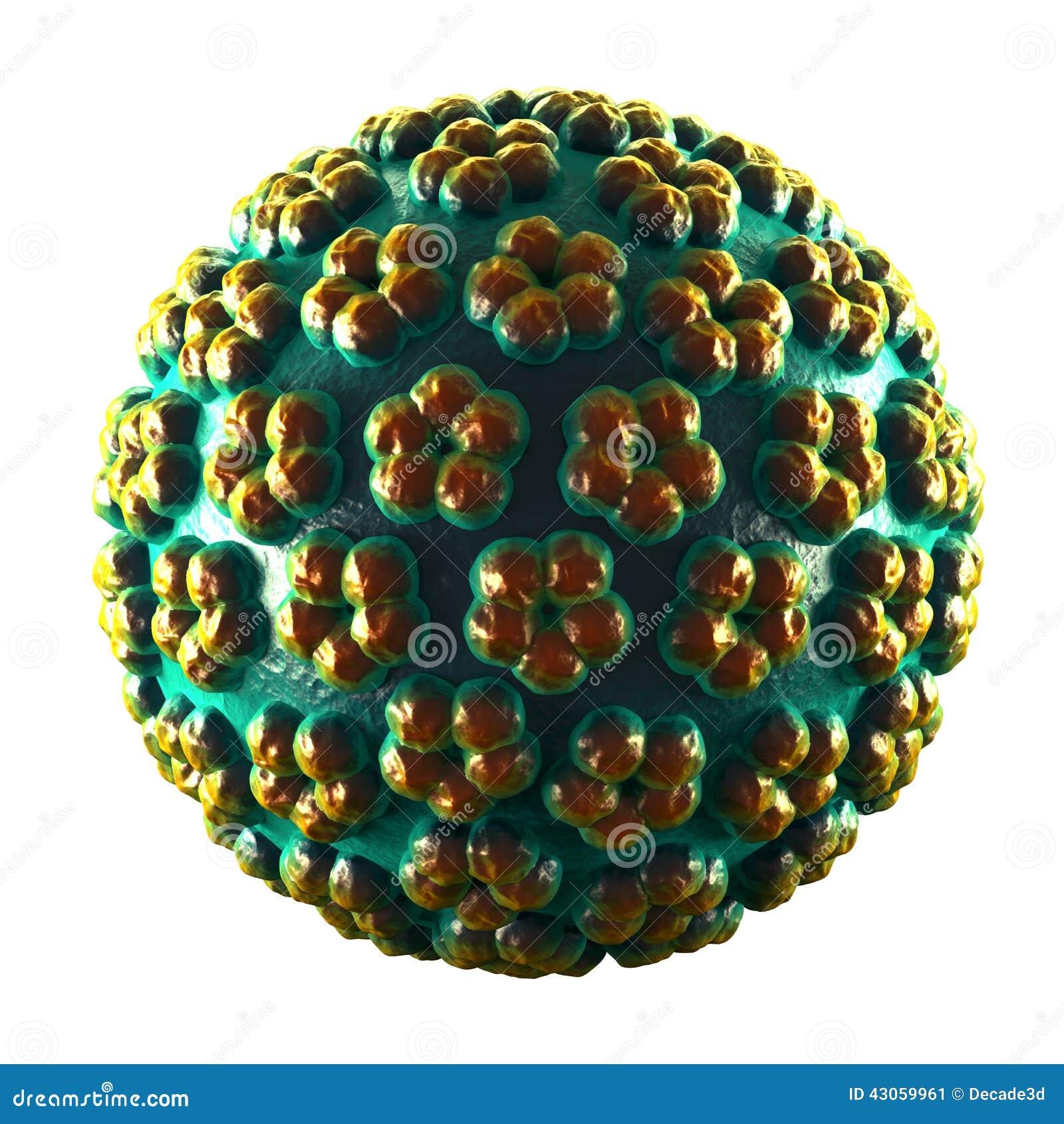 papilloma vírus