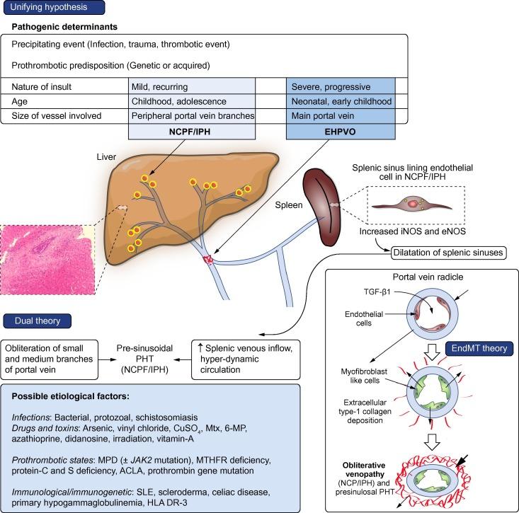 Neuroimmunmoduláció az emésztőrendszerben