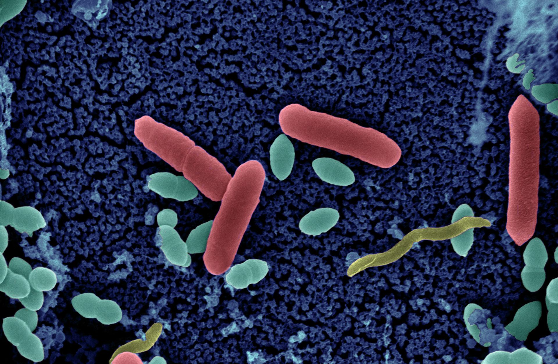 schistosomiasis 76 ország pinworms biológia