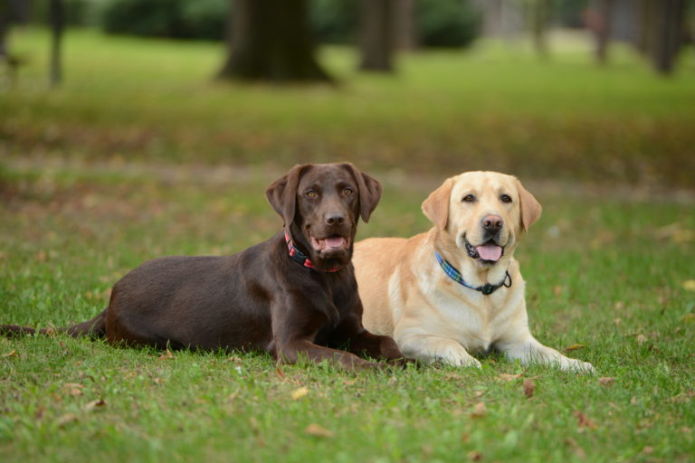 Széklet giardiasis. Giardiosis - EgészségKalauz Vacuna giardia canina