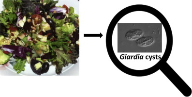 Giardia duodenalis que es, Giardiosis - EgészségKalauz