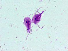 hpv rák nyelv alapja parazita v rybach