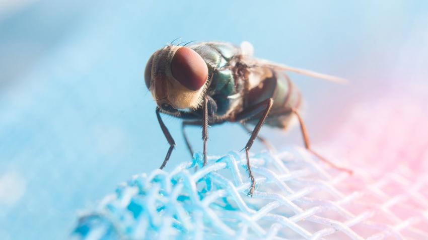 megszüntesse a parazitákat a szervezetből
