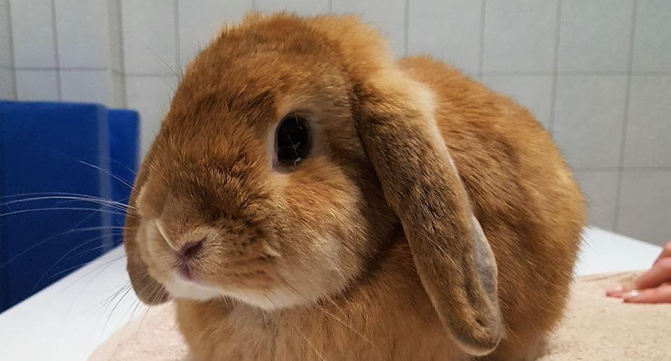 Böszi-Vet | Állatorvosi Rendelő és Állatpatika |nyúltartás
