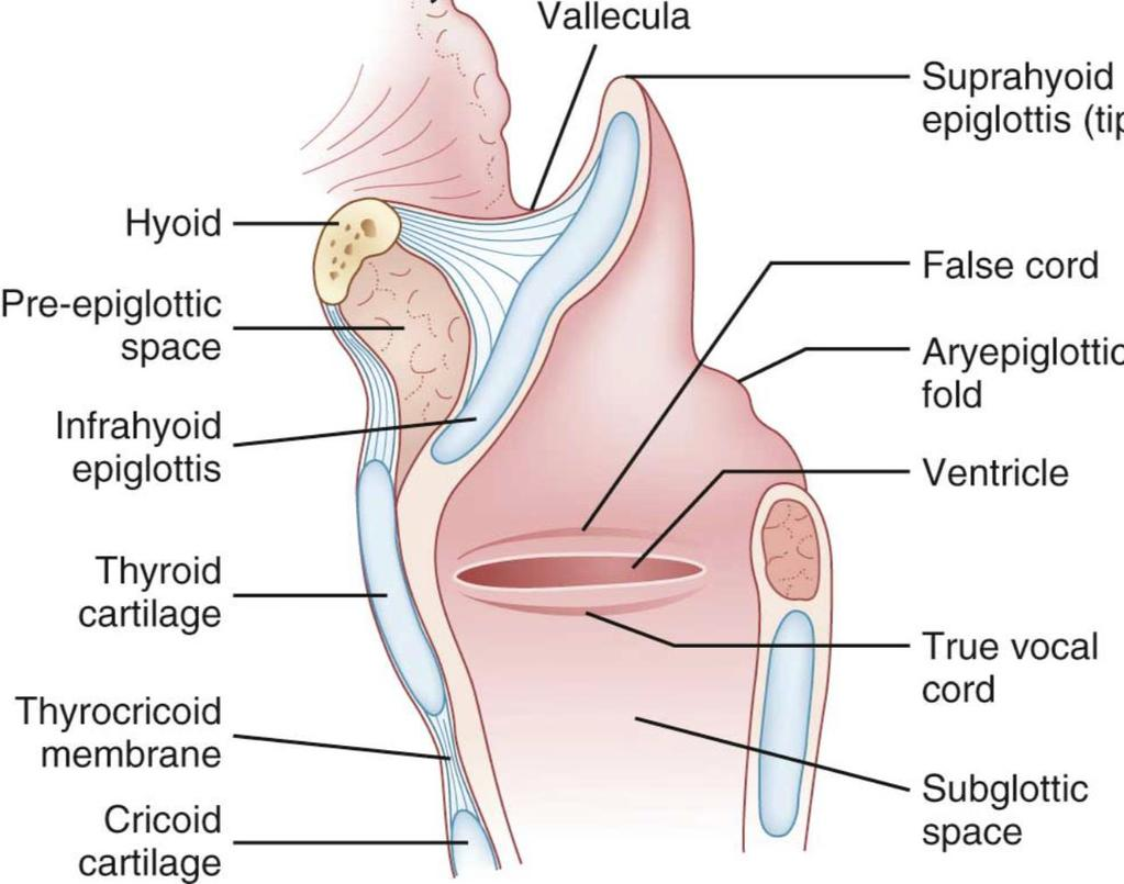 Artróziskezelő gyógyszerek injekciói