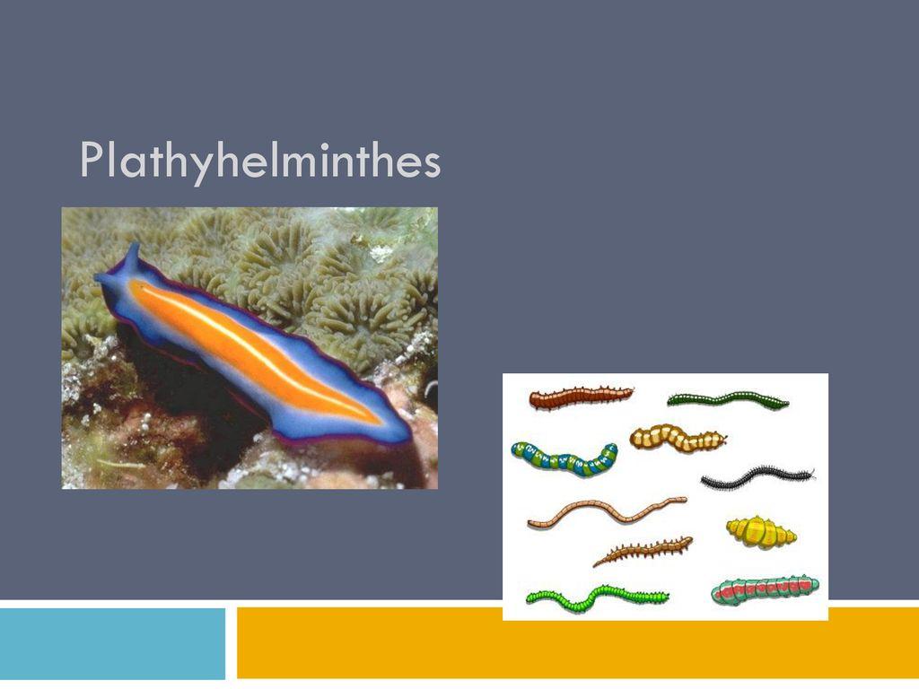 Gambar platyhelminthes és nemathelminthes. Betekintés: Mollusca (Puhatestűek)