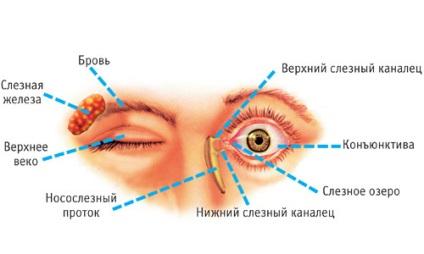 távolítsa el a szem körüli papillómákat)