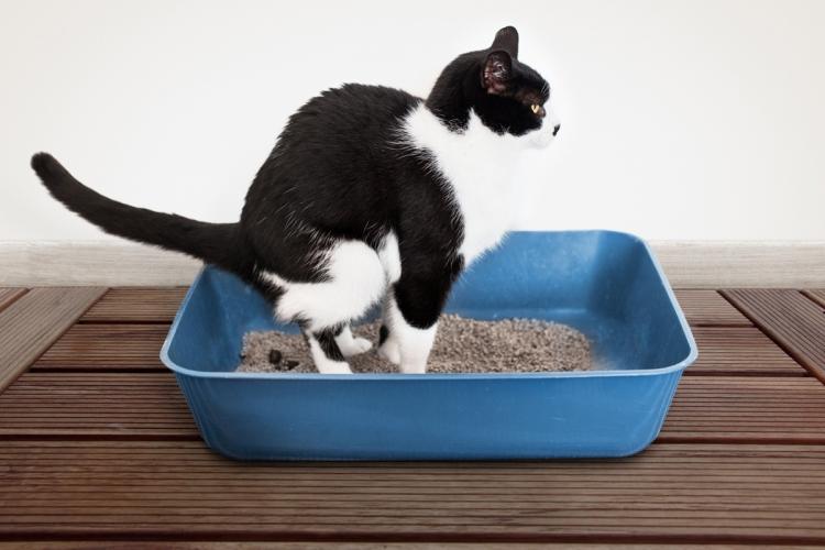 Féreghajtó készítmények macskák részére