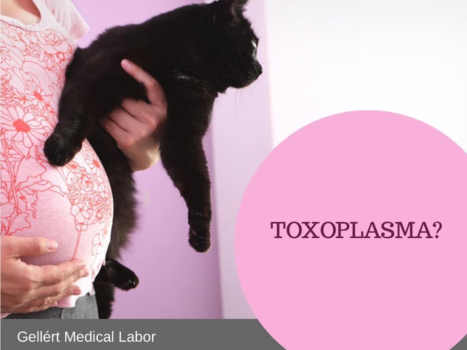 negatív toxoplazma terhesség alatt)