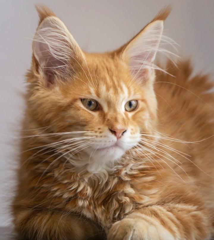 macskáknak pinwormjaik vannak