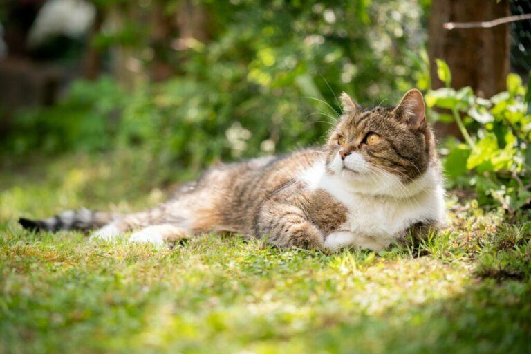 Mi van akkor, ha a macskának növekedése a mancsok párnáiban történik?