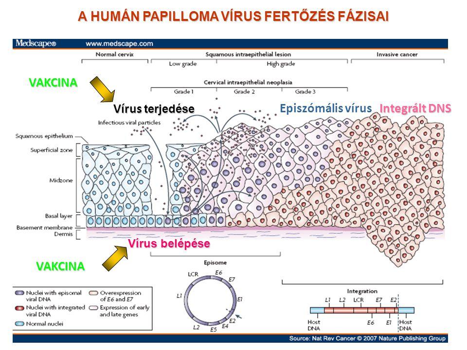 a bőr patológiájának pikkelyes papillómája körvonalazódik