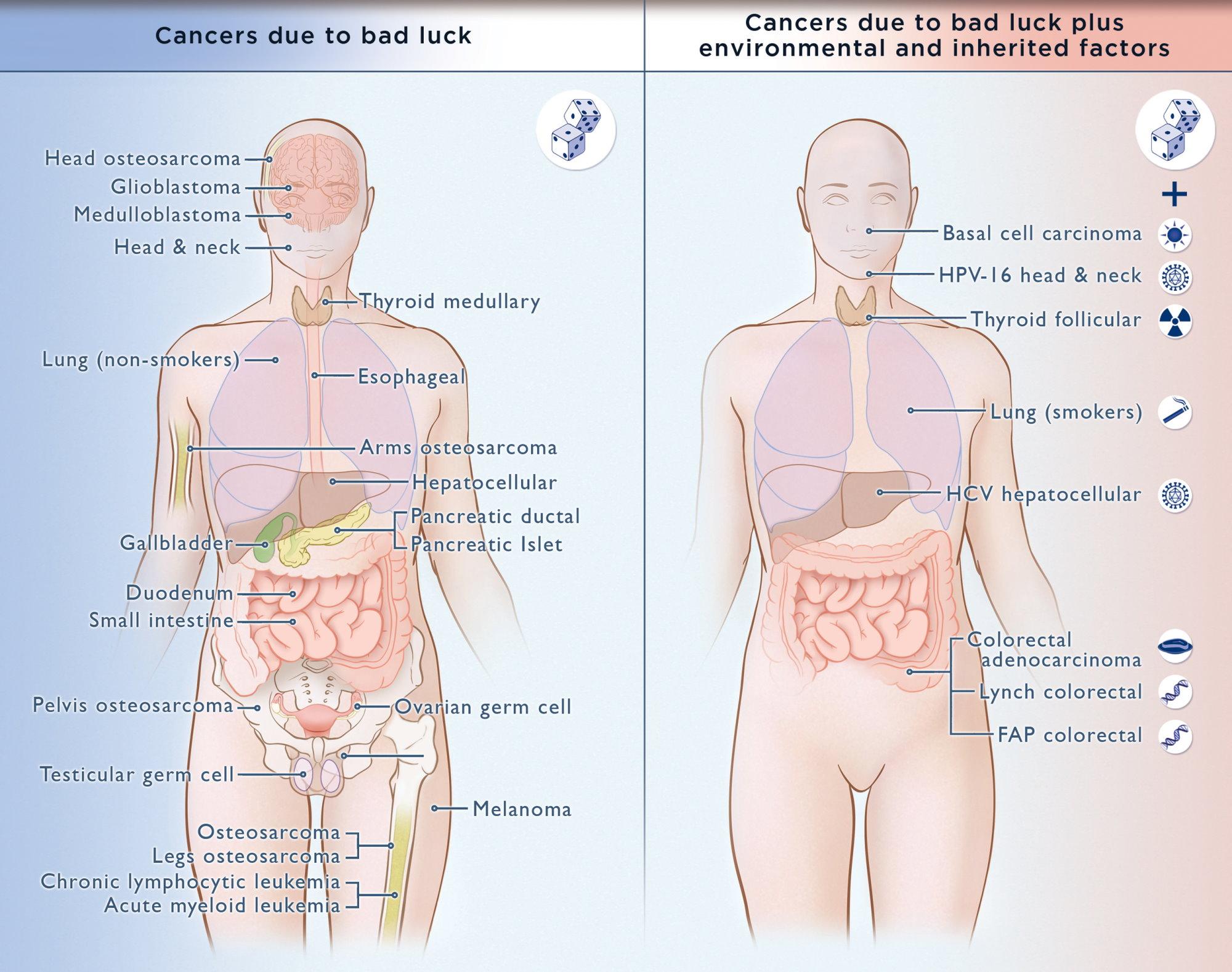 a nem rákos hpv rákossá válhat-e