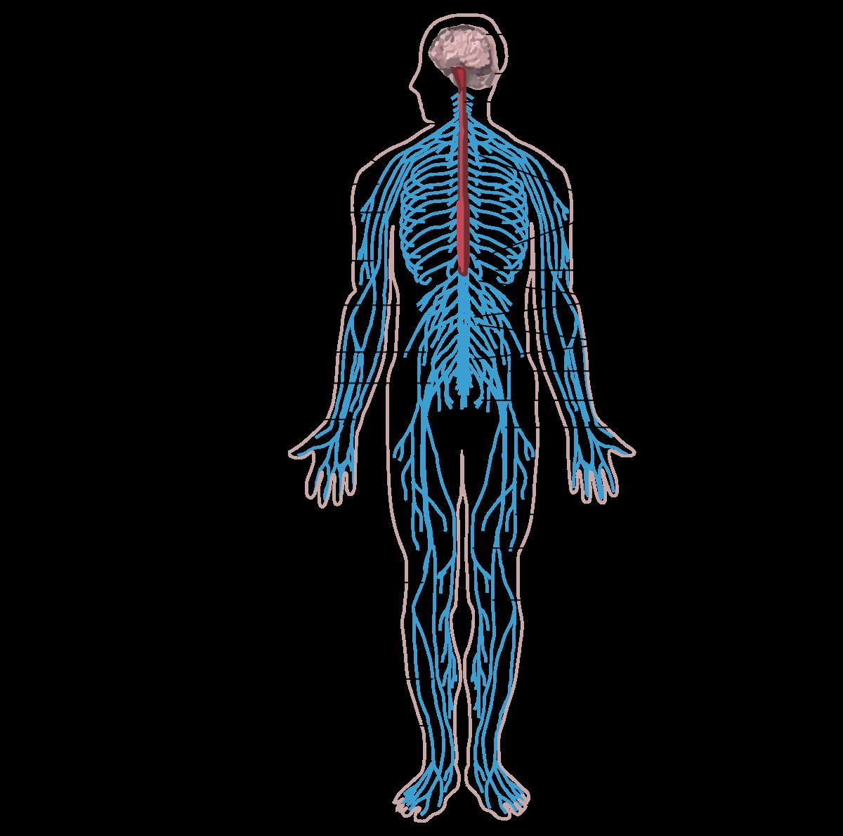a paraziták hatékony kezelése az emberi testben
