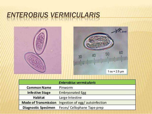 Krónikus enterobiosis