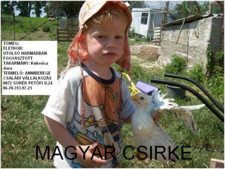 üvöltés csirkék kezelésében)
