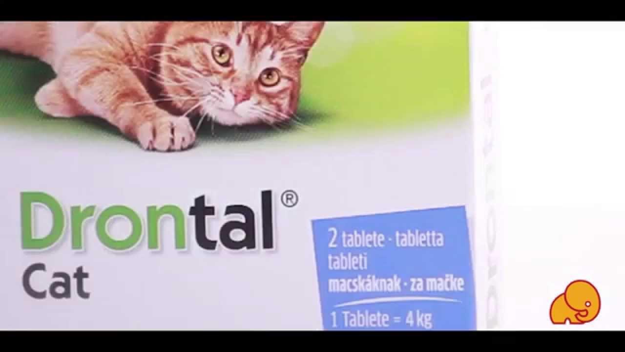 drontal tabletta a féreg macskának)