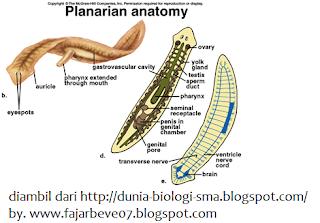 A cna tiltja a parazitákat condilom gigant bushke leventhal