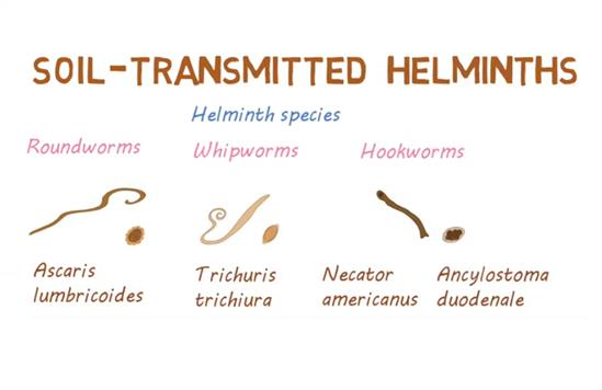 helminths helminthiases