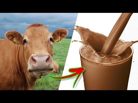 tejelő férgek)
